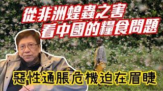 從非洲蝗蟲之害看中國的糧食問題 惡性通脹危機迫在眉睫〈蕭若元:蕭氏新聞台〉2020-02-18