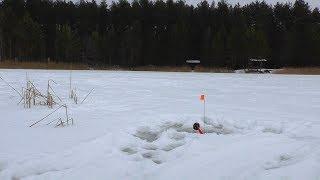 Ловля щуки зимой на прудах
