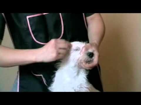 Lekarstwem ludowej do usuwania włosów na rękach