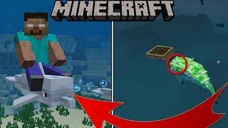 TOP 5 SEGRETI SUI DELFINI: Minecraft