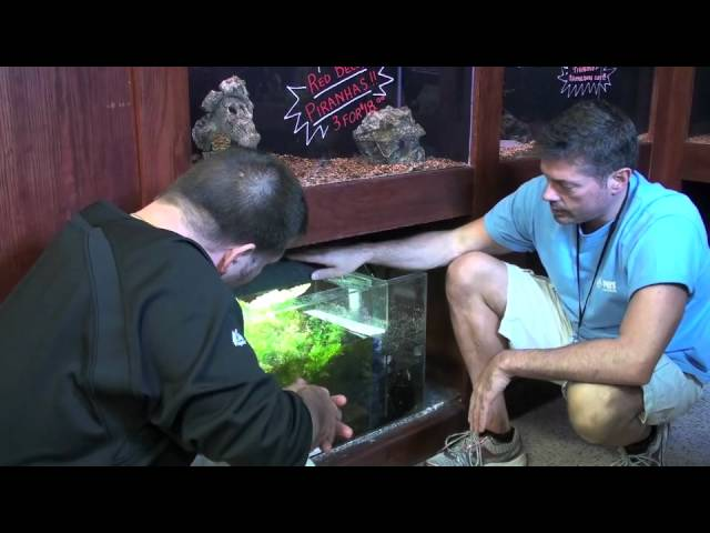 How to set up a Discus Fish - Wetpets & Friends - Video by AmericanReef