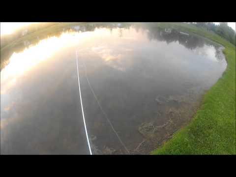 Pond Fishing with Senkos