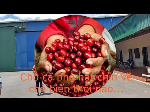 FAVIO COFFEE - RANG XAY CÀ PHÊ CHẤT LƯỢNG CAO