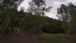 FPV in the trees