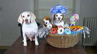 Dog Makes Cutest Gift Basket Ever! How To Put Together Gift Baskets with Funny Dogs Maymo & Penny