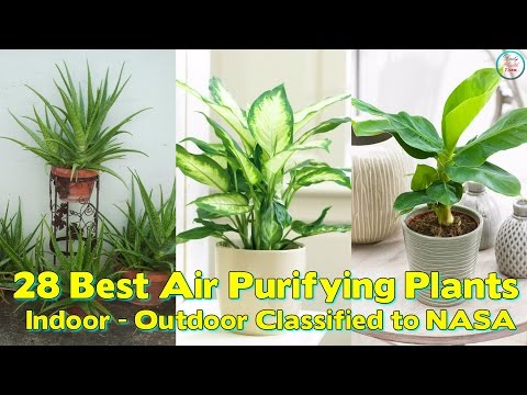 28 Best Air Purifying Plants ( For Indoor / Outdoor ) Classified to NASA