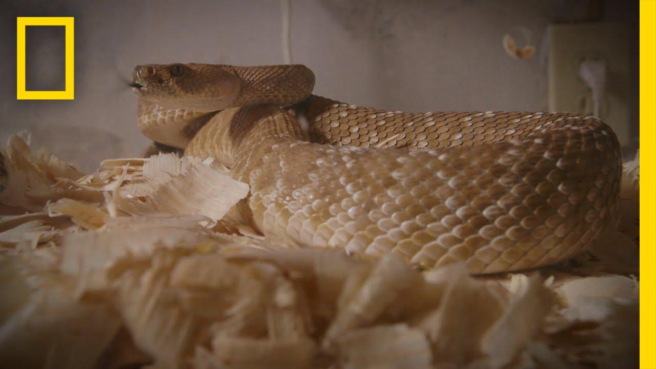 The Snake Room | Snake Salvation thumbnail