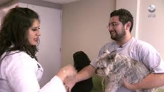 Hospital Veterinario - Programa 8