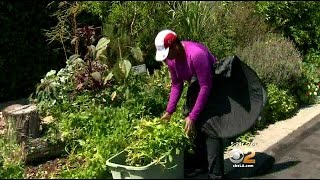 South Central Gardener Fights City Resistance On Guerrilla Gardening