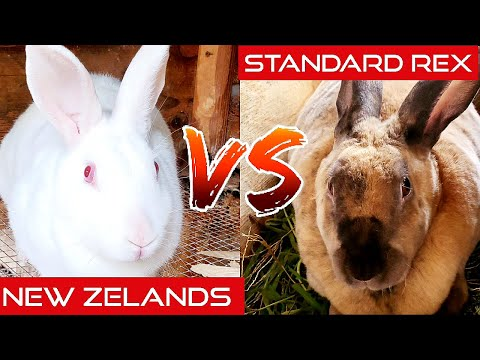 , title : 'What Is The Best Meat Rabbit Breed?