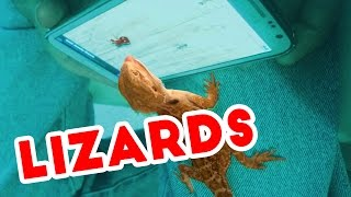 Funniest Lizard & Reptile Blooper & Reaction Videos of 2016 Weekly Compilation | Funny Pet Videos