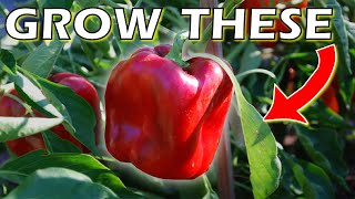 How to Grow Bell Peppers From Seed Indoors - DO THIS for SUCCESS