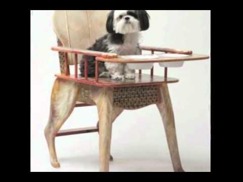 Talin's Bone Appetit Seat On the Martha Stewart Show