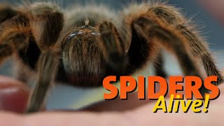 Spiders Alive! – Spider Facts 101
