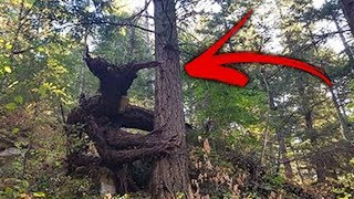 7 Mythical Creatures People Have Seen In Real Life!