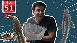 โคตรปลาสเตอร์เจียน 200 ล้านปี (Sturgeon) - เพื่อนรักสัตว์เอ้ย EP 51 (1/3)