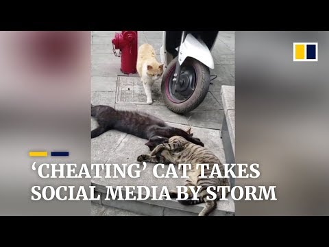 , title : ''Cheating' cat takes Chinese social media by storm'