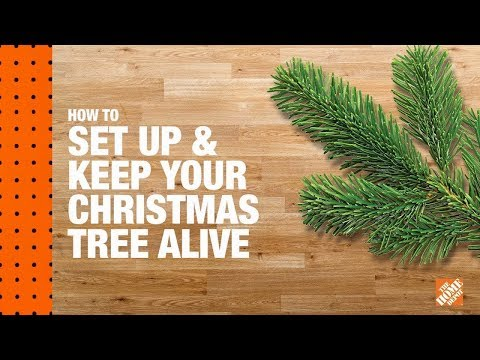 How to Set Up and Keep Your Christmas Tree Alive