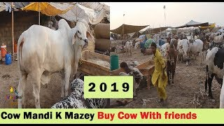 Cow Mandi Sohrab Goht Cow Mandi K Mazey Buying Cow With Friends - Cow Market In Pakistan