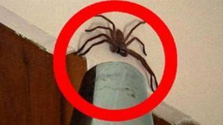 Big Spider Attacks Daddy Vacuum Shooter