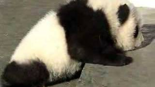 The Most Pathetic Baby Panda Ever