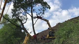 重機による危険木の伐採作業① 株式会社レサルタード