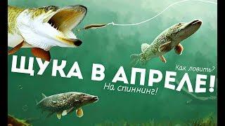 Какая рыба клюет в апреле на спиннинг