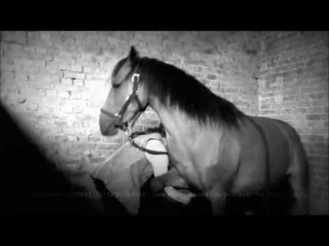 Le stimulant de cheval des femmes