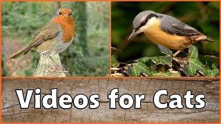 Videos für Katzen - Vögel und Eichhörnchen im Herbst