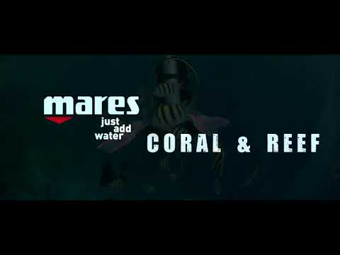 Coral and Reef on coral reefs