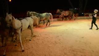 Pferdetraining Zirkus Probst
