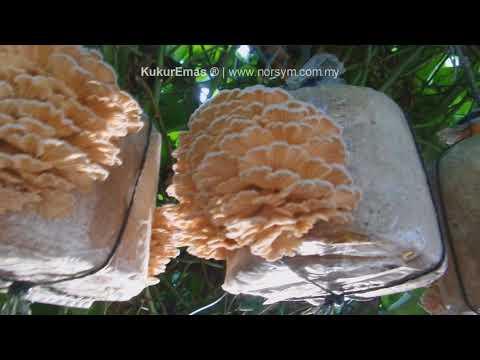 Helminthiasis bőrkiütés