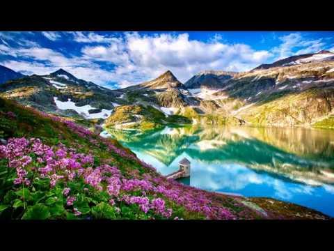 Flowers around the lake (HD1080p)