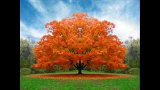 Música Chinesa De Cura Outono 2   Parte 1) Chinese Healing Music