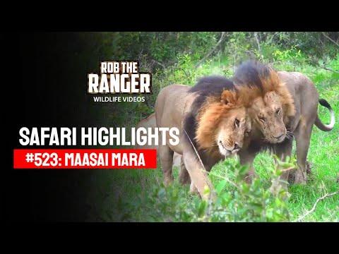 Safari Highlights #523: 11 & 12 June 2019 (Latest Wildlife Sightings)
