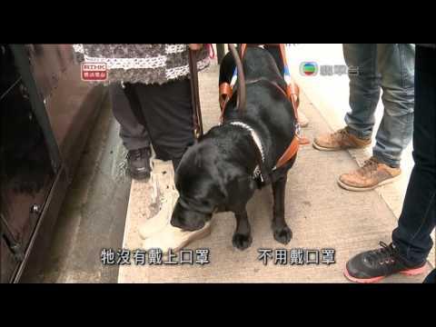 大愛科普《發現》台灣導盲犬