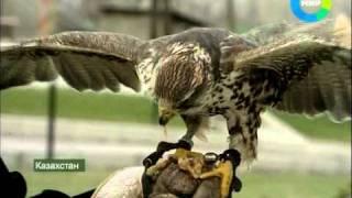 Охота с беркутами. Эфир 24.04.2011