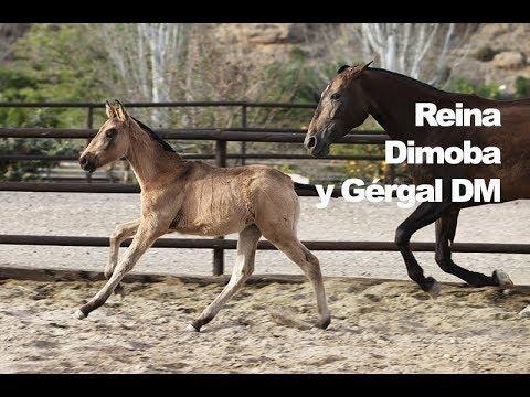Reina Dimoba y Gérgal DM (Publicado 9-4-2018)