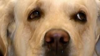 How to Teach an Old Dog New Tricks