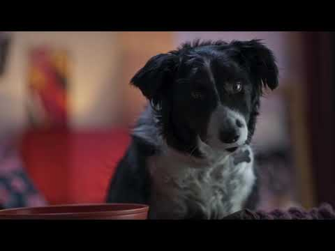 ΣΑΝ ΤΟΝ ΣΚΥΛΟ ΜΕ ΤΗ ΓΑΤΑ 3 ( Cats & Dogs 3) - Official Dubbed Trailer