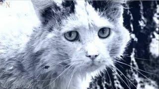 Учиться любить,как уродливый кот 💗 Читает Александр Дудов
