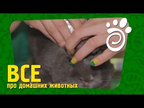 Название лекарства от глистов для котов