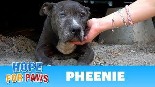 Senior dog lived under a shipping container for 9 YEARS!