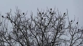 Adventliches Vogelkonzert