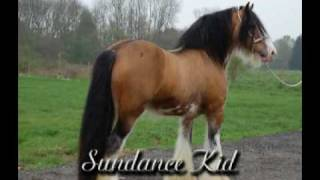 GypsyMVP June 2009 Introduction to the Gypsy Vanner Horse Breed