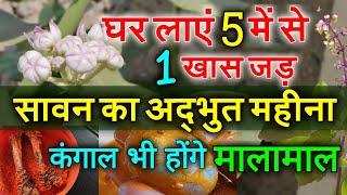 149 साल बाद सावन अद्भुत संयोग, घर लायें 5 में से कोई भी 1 पौधा, कंगाल भी होंगे मालामाल Hattha Jodi