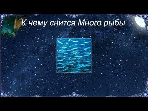 К чему снится Много рыбы (Сонник)