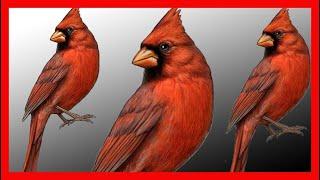 Cardenal Rojo. Canto. Descargar CD. Excelente. Download CD Cardinalis Cardinalis