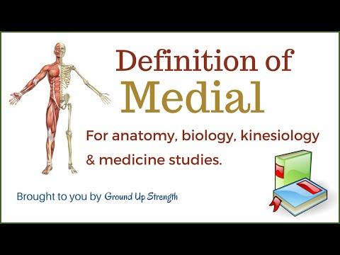 Download Medial Definition Anatomy Kinesiology Medicine Free