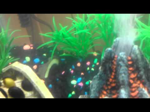 Asian Themed Fish Tank Decorations  from img.youtube.com
